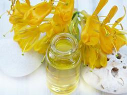 HONEYSUCKLE JASMINE Bath Body & Home Products Vetiver Floral